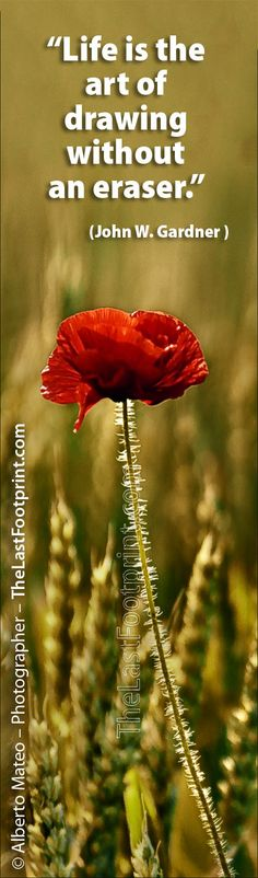ツツツ By Alberto Mateo - Travel Photographer. Poppy in crop fields Aero Island, Denmark. Quotes that make you think: Life, by John W. Gardner.