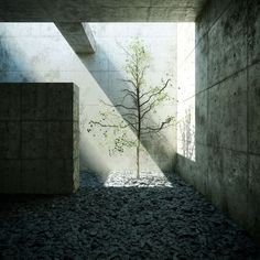 Tadao Ando long after mankind.
