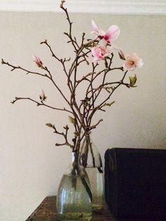 #Magnolia takken in bloei!