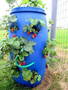 1000 id es sur le th me planteurs de fraises sur pinterest pots de fraises pots de fleurs et. Black Bedroom Furniture Sets. Home Design Ideas