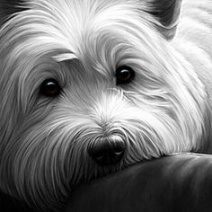 Dog Tired - West Highland Terrier, by Nigel Hemming