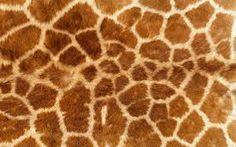 textuur dieren - vacht
