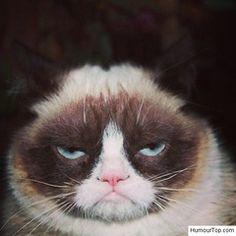 1000 id es sur humour sur les chats sur pinterest chats grincheux dr les humeur grumpy cat et. Black Bedroom Furniture Sets. Home Design Ideas