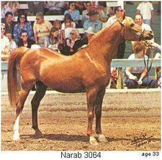 Narab 3064 aged 33