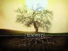 rooted - Google Search