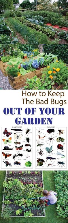 How to Keep Bad Bugs Out Of Your Vegetable Garden #Organic_Gardening #organicvegetablegardening
