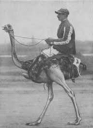 ride a ostrich / to do