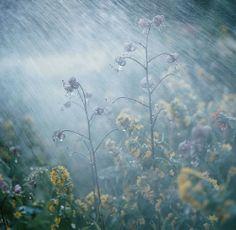 Anna Clarén, Holding.  Regn, grönska, vatten, växter, bevattning, ljust, blå, grön, gul, lila, kort skärpedjup