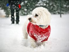 Tips on keeping your pet active during the winter.