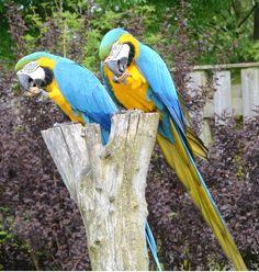Blijdorp, Rotterdam zoo