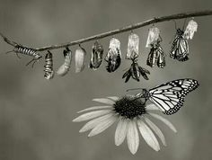 Feel like many have or are going through such a metamorphosis. AMAZING TIMES!