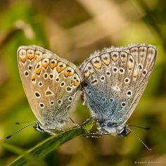 Schmetterlinge by Babs Helferich on 500px