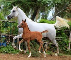 Top 10 Horses Pictures--these two remind me of a set of Breyers I have