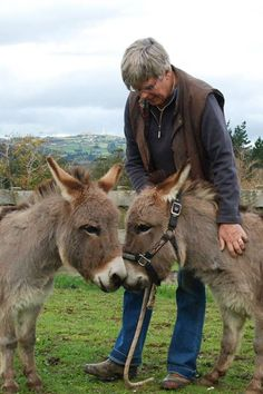 Courtesy: Clovercrest Miniature Donkey Stud, Pukekohe (New Zealand). Baby Donkey, Cute Donkey, Mini Donkey, Baby Cows, Farm Animals, Animals And Pets, Cute Animals, Miniature Donkey, Zebras