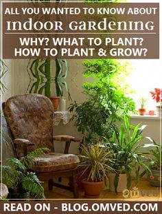 INDOOR GARDENING - APARTMENTS/ CONTAINER GARDENING - Tips and Information on how to, what to, when, and why to  grow green. Read more...