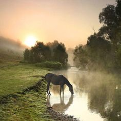 Most days when we cross the river into Devon on the way to work there's a family of horses grazing at the waters edge, always shrouded in mist, always oblivious to the chill in the air, two foals two parents completely at peace, it's one of the better parts of my day, passing them.