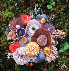 Nature Medley by Jill Bliss Artwork - created with found & arranged natural objects on daily wanderings among the islands of the Pacific Northwest.