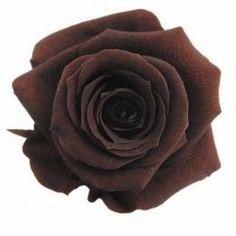 FL0100-19 Standard Rose / Cafe