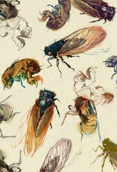 #summercicadas