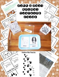 Animal tracks Free three-part maps Printable PDF Weather Activities For Kids, Animal Activities, Teaching Activities, Educational Activities, Artic Animals, Home Learning, Toddler Learning, Animal Tracks, Biomes