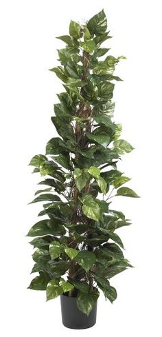 Nearly Natural 6613 Pothos Climbing Decorative Silk Plant, 63-Inch, Green ** Read more  at the image link.