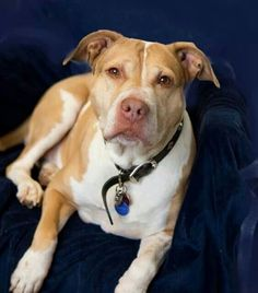 Kiera Mae Portland Shelter Dog go to: http://multnomahdogs.blogspot.com/?m=1