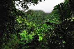 Nevis Island Rainforest West Indies
