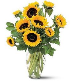Blossom Flower Shop offers this beautiful Summer Sunflowers arrangement comprised of yellow sunflowers for same-day delivery in Yonkers, White Plains and parts of the Tri-state area. Summer Flower Arrangements, Sunflower Arrangements, Vase Arrangements, Sunflower Centerpieces, Simple Flowers, Summer Flowers, Beautiful Flowers, Month Flowers, Send Flowers