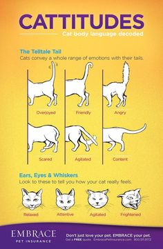 Learn to read your cat's body language! For more on cat body language ... #Behaviour - More about Cat Behaviour at http://Catsincare.com!