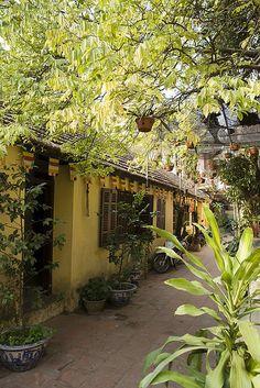 houses vegetation (Hanoi - Vietnam)