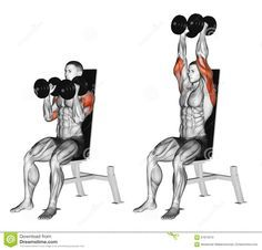Dumbbell Seated Shoulder Press Parallel Grip Stock Illustration - Illustration of bodybuilding, fitness: 67872010 - workout - Shoulder Mass Workout, Dumbbell Shoulder Press, Good Shoulder Exercises, Gym Workout Tips, Fitness Workouts, Street Workout, Fitness Goals, Dumbbell Workout, Deltoid Workout