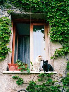 Ravello, bianco e nero | by casa.m