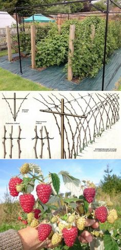 Creative DIY ideas for support climbing vegetables, plants and flowers | My desired home