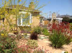 This beautiful home received a stunning makeover to create a low-water landscape with California native plants as part of the Long Beach lawn-to-garden program.