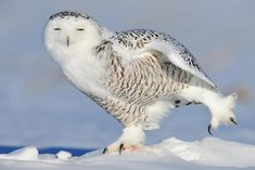 adorable animals stretching owl