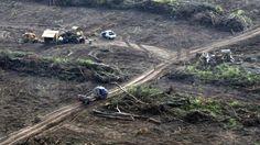 Argentina: Histórica demanda por desmonte en Salta