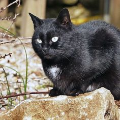 """""""Head-Bent"""" Pussy Rue (hidden behind a stone !), And I in birds tuned! but not in the same place for I  3 h) by Olao-Olavia / Okaio Créations  by fz 1000 2014"""