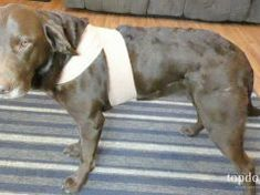 DIY Dog Anxiety Wrap: Cheap & Easy Best Treats For Dogs, Best Dogs, Top Dog Food Brands, Top Dog Foods, Prescription Dog Food, Worms In Dogs, Pregnant Dog, Sweet Potatoes For Dogs, Wet Dog Food