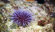Have you ever gazed into a rock pool and wondered what lives inside? Well, these are the most common inhabitants.