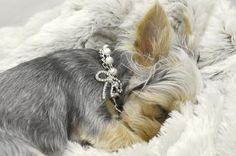 Dibalulu Pet Couture Dog Accessories – Pearl Beauty Dog Necklace – S « DogSiteWorld.com – DogSiteWorld-Store