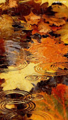 Raindrops, autumn leaves & ripples