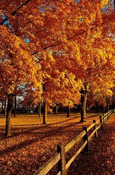 Autumn Fences by Phil Koch - beautiful | PicsVisit