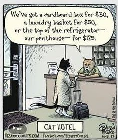 Funny pictures about Cat Hotel. Oh, and cool pics about Cat Hotel. Also, Cat Hotel photos. Crazy Cat Lady, Crazy Cats, Funny Animal Pictures, Funny Animals, Animal Funnies, Catsu The Cat, Bizarro Comic, Cat Hotel, Cat Comics