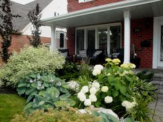 Hydrangeas, Ivory Halo Dogwood, Big Blue Hostas, Pink Spiaea's, and European Purple Beech trees in a front yard design Landscaping Retaining Walls, Landscaping With Rocks, Outdoor Landscaping, Front Yard Landscaping, Landscaping Ideas, Ivory Halo Dogwood, Hydrangea Garden, Hydrangeas, Xeriscape Plants