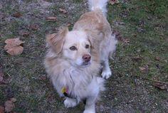 Este es Siper, mi perro sin raza, pero lo mejor que nos ha podido pasar en la vida, el haberle adoptado. Él viene de APAP, Asociación Protectora de Animales y Plantas San Martín de Porres de Alcalá de Henares, de donde también adoptamos a Domba, una perra preciosa que murió hace ya dos años...