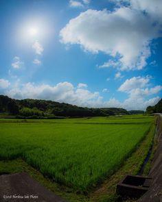 田舎道  稲のグリーンと青空のブルーが美しい   #カメラ初心者  #カメラ好きな人と繋がりたい  #カメラのある生活  #カメラ好きと繋がりたい  #写真撮ることが好きな人と繋がりたい  #写真好きです  #写真は心のシャッター  #samurai_selection  #jp_views_夏  #my_travel  #art_of_japan_  #稲穂  #mylove  #mylife #art_of_japan_  #instaart #栃木カメラ部  #my_art  #絶景スポット  #日本の絶景  #instafollow  #絶景  #美景  #bokeh_bliss  #ファインダー越しのわたしの世界  #tv_lifestyle  #ig_japan  #bestphoto_japan  #photogenic  #魚眼レンズ