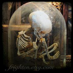 halloween decoration skeleton photography print little skeleton in glass dome photo ftw - Pirate Halloween Decorations