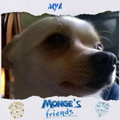 Mya #Mongesfriends