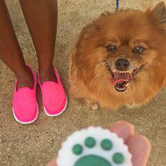 Yummy treats for your Pup  Skechers GOwalk 2 - Super Sock   Shop here: https://www.skechers.com/en-us/style/13955/skechers-gowalk-2-super-sock/pnk