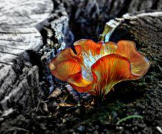 mushroom flower